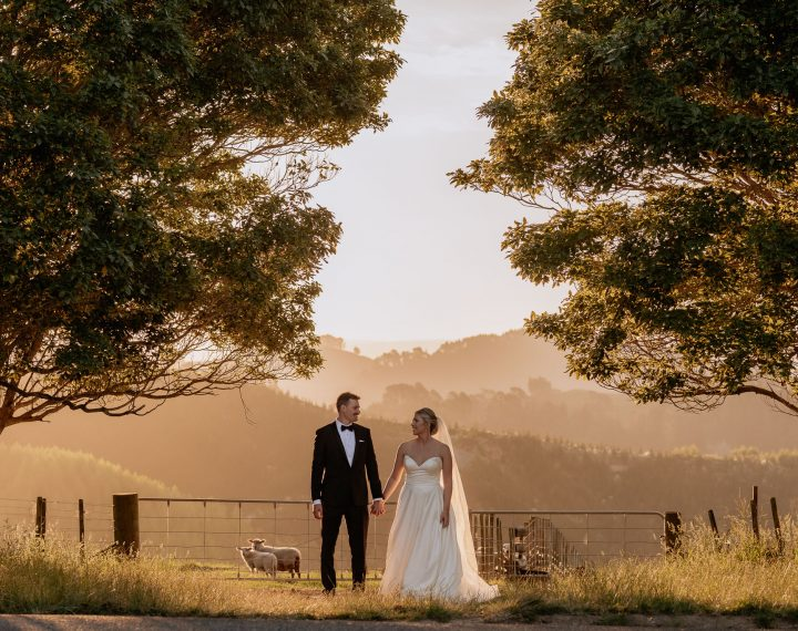 New Zealand Elopement photo of couple in the hills of Tauranga with sheep