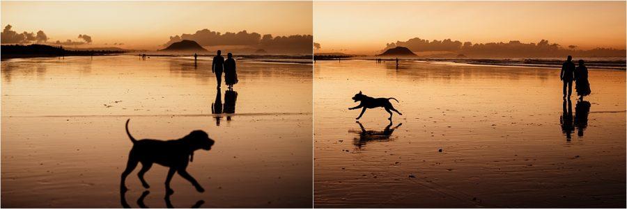 Photo bombing dog on wedding day at Papamoa Beach