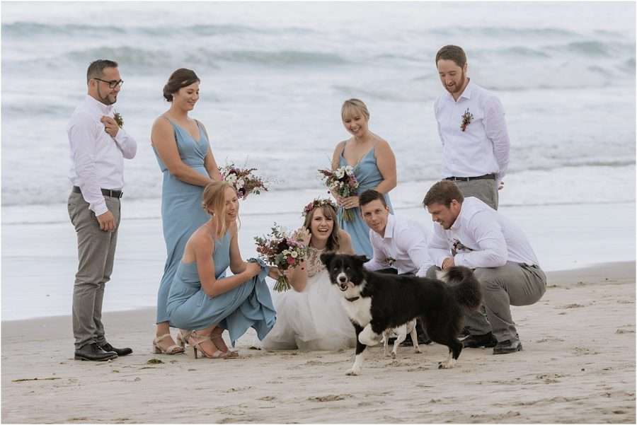 Bridal party playing with puppy and dog