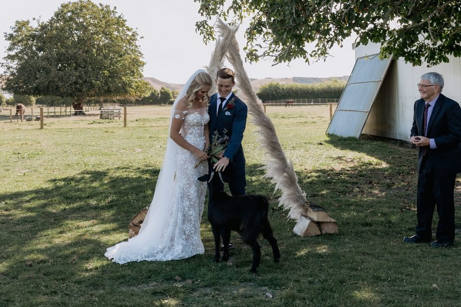 Bride and groom laughing at goat after ceremony