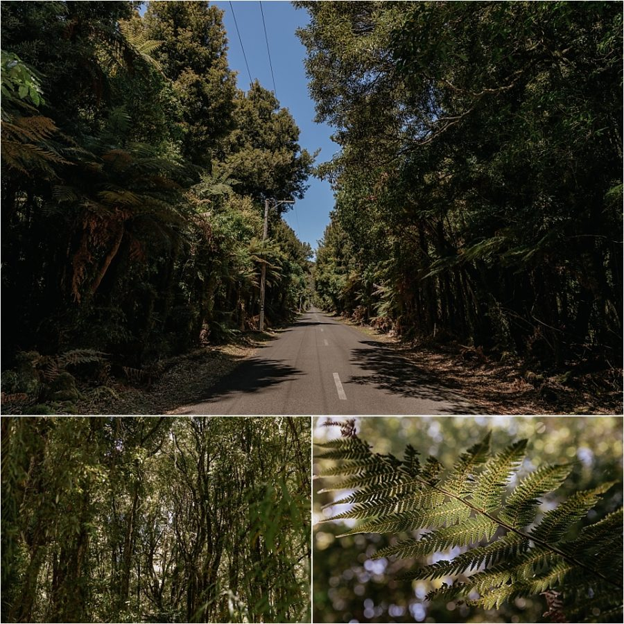 New Zealand road in the bush and forest