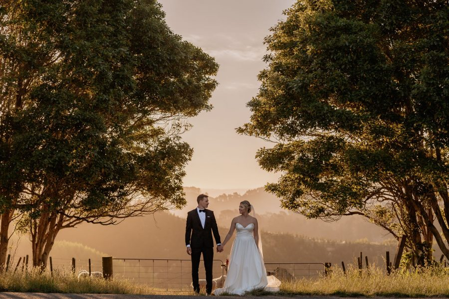County scene of Elopement with New Zealand Sheep