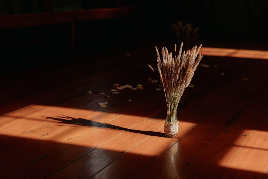 Details of dried flowers in sunlight