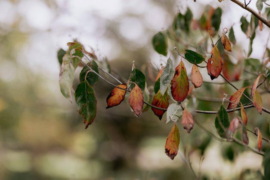 autumn leaves waikato driveway