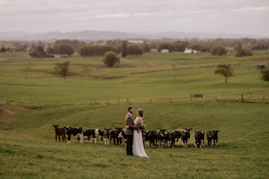 Wedding photography at farm wedding of couple standing in front of calves