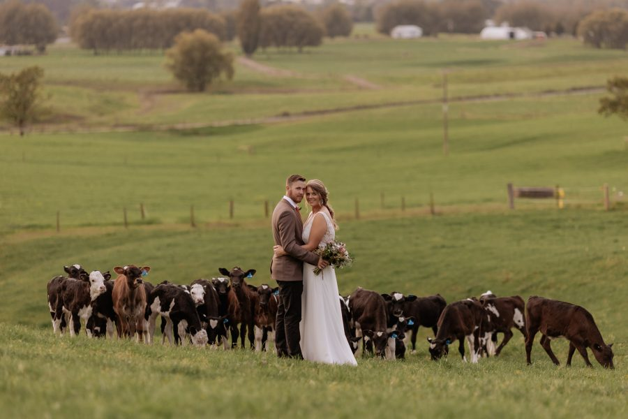 Farm couple with calves behind them smiling at camera